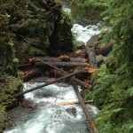 A log jam at the falls