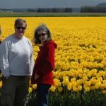 Tulip country in western Washington