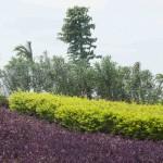 Jardin Aromatico